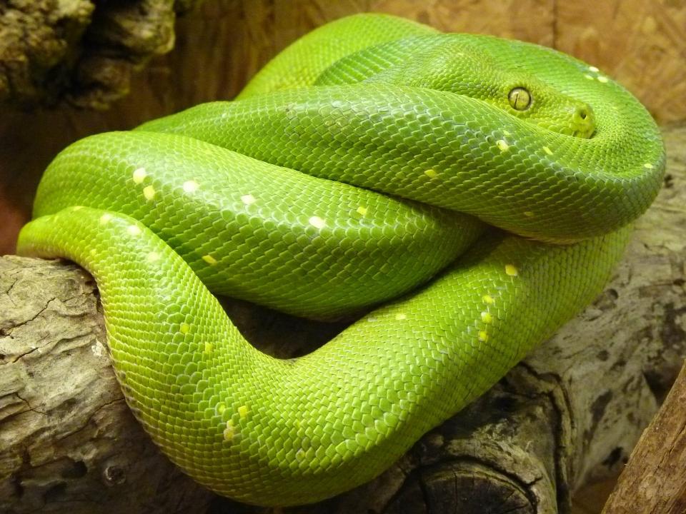 """Das Wort Kundalini bedeutet auf Sanskrit: Shakti """"zusammengerollte Schlangenkraft""""."""