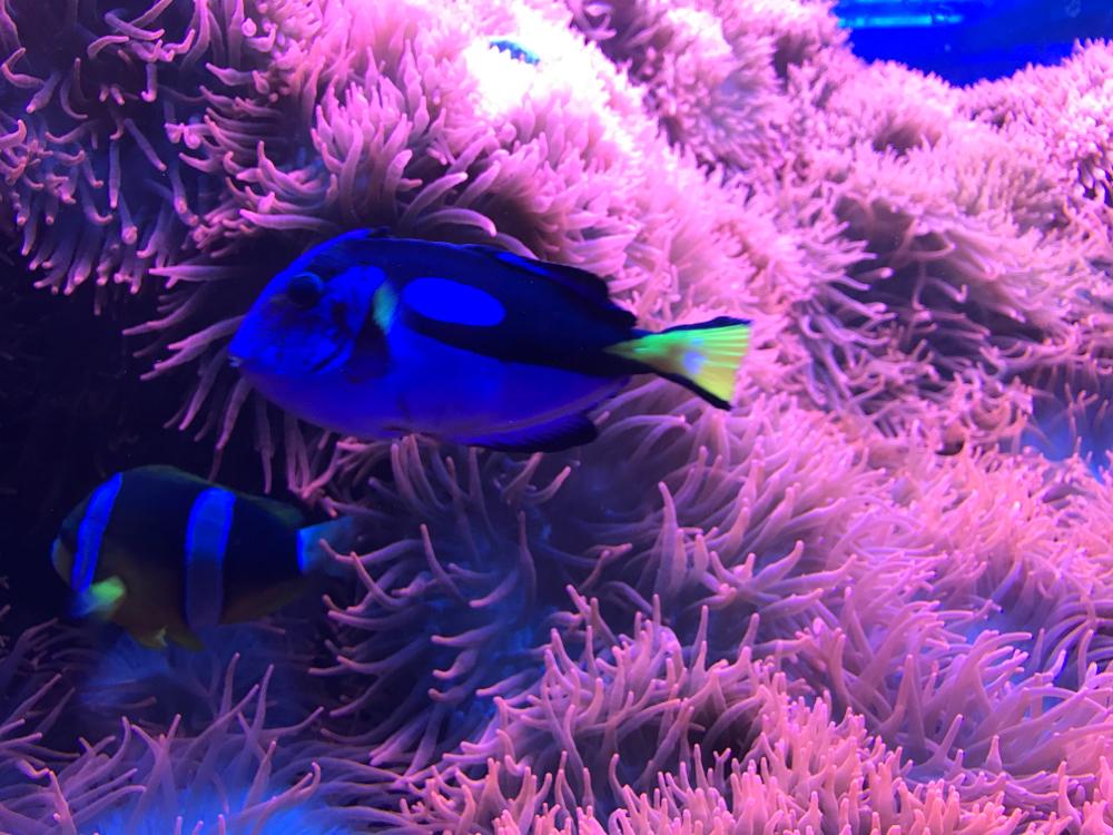 L'agopuntura permette di ristabilire la simbiosi che c'è tra uomo e ambiente un po' come il pesce pagliaccio e Dory e l'anemone