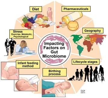 L'importanza del microbiota intestinale