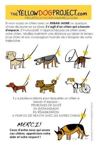 chien ruban jaune