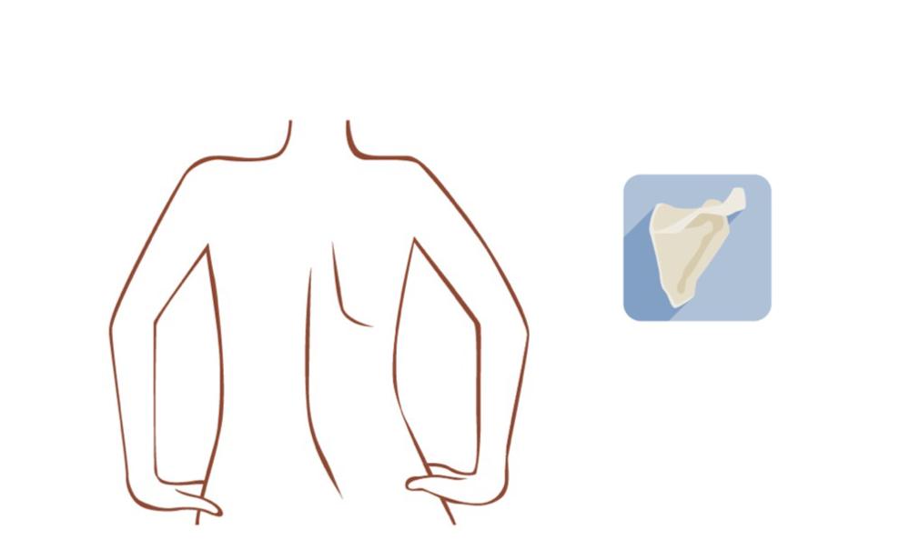 甲骨 コリ 肩