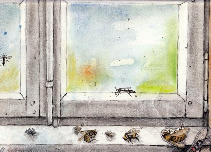 Die Barriere: Unsichtbar und tückisch ist sie, die Glasscheibe. Die Insekten waren zur falschen Zeit am falschen Ort. Mischtechnik, DIN A4, 2010.