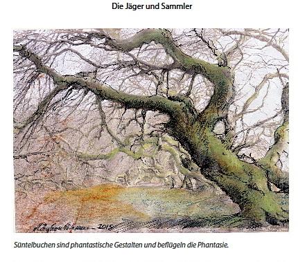 Diese Zeichnung zeigt die bizarre Wuchsform von Süntelbuchen. Diese Mutation ist im Süntelgebirge im Weserbergland und an einem Ort in Frankreich zu finden.