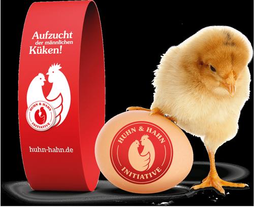 Die Initiative Huhn und Hahn - Aufzucht der männlichen Küken