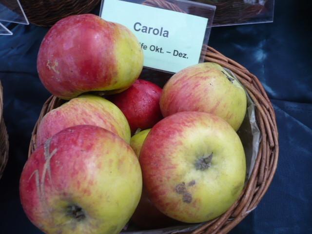 Apfel Carola ( Erwin Baur )