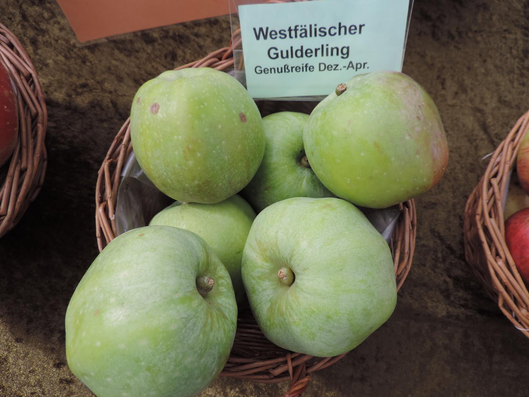 Apfel Westfälischer Gulderling