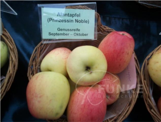 Apfel Alantapfel (Prinzessin Noble) Malus Alantapfel (Prinzessin Noble) www.funke-pflanzen.de