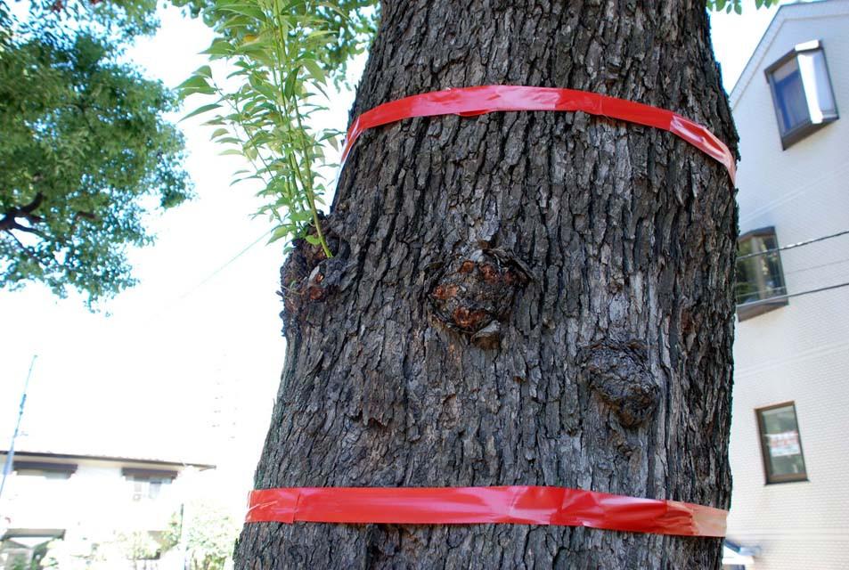 赤いテープが伐採樹木