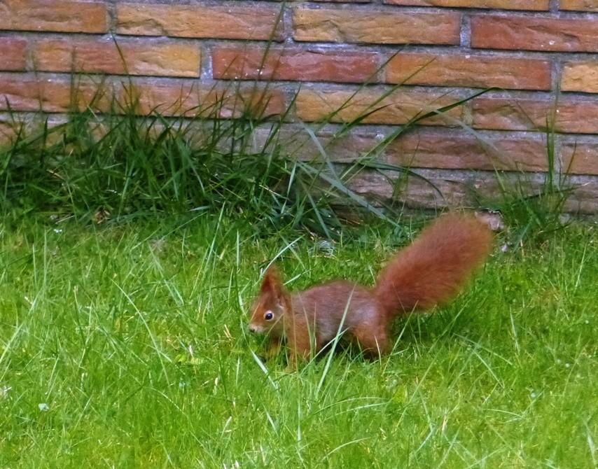 Heute, Ostermontag, für Eichhörnchen offenbar ein Werktag