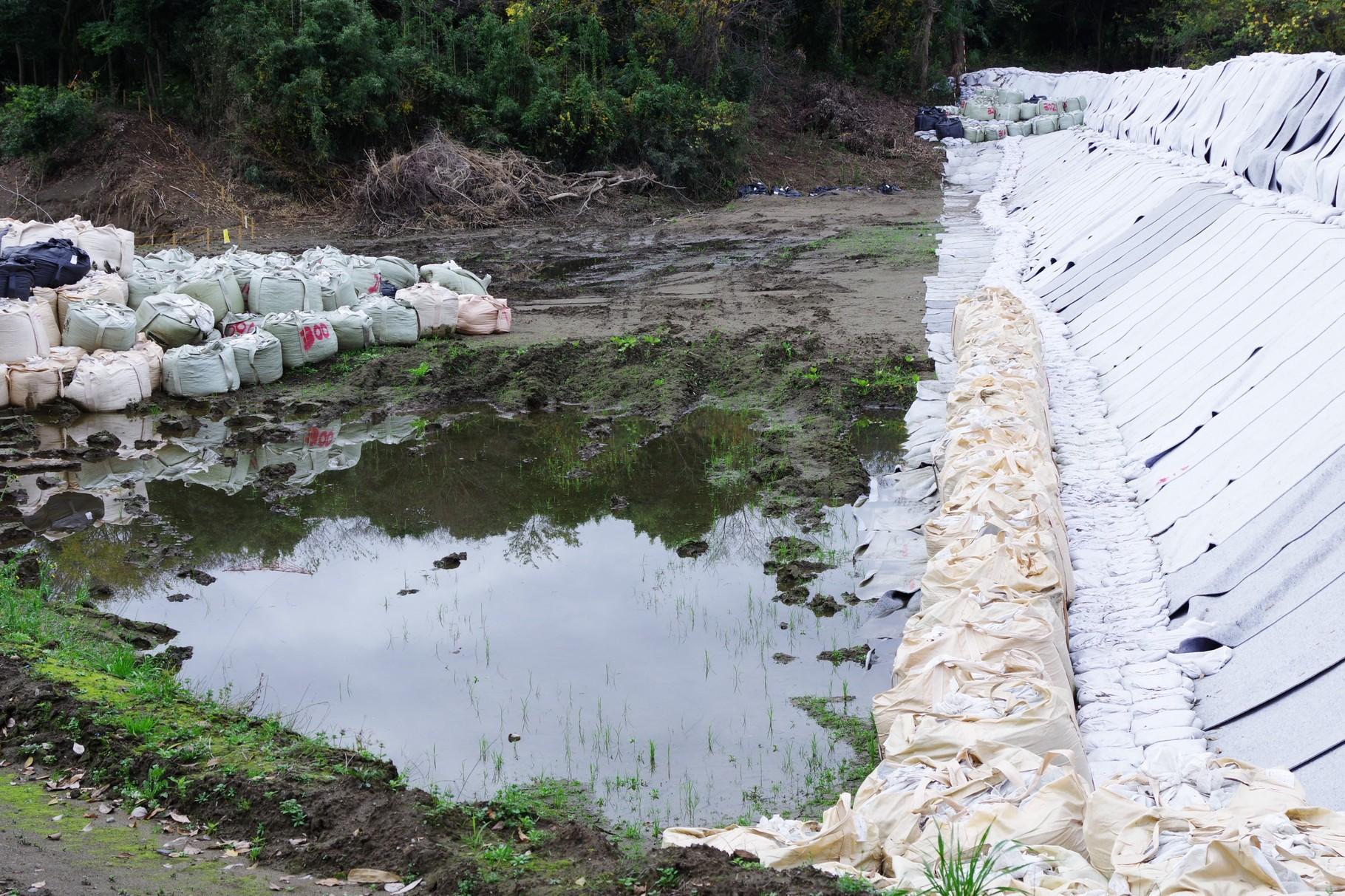 11月19日 増水している