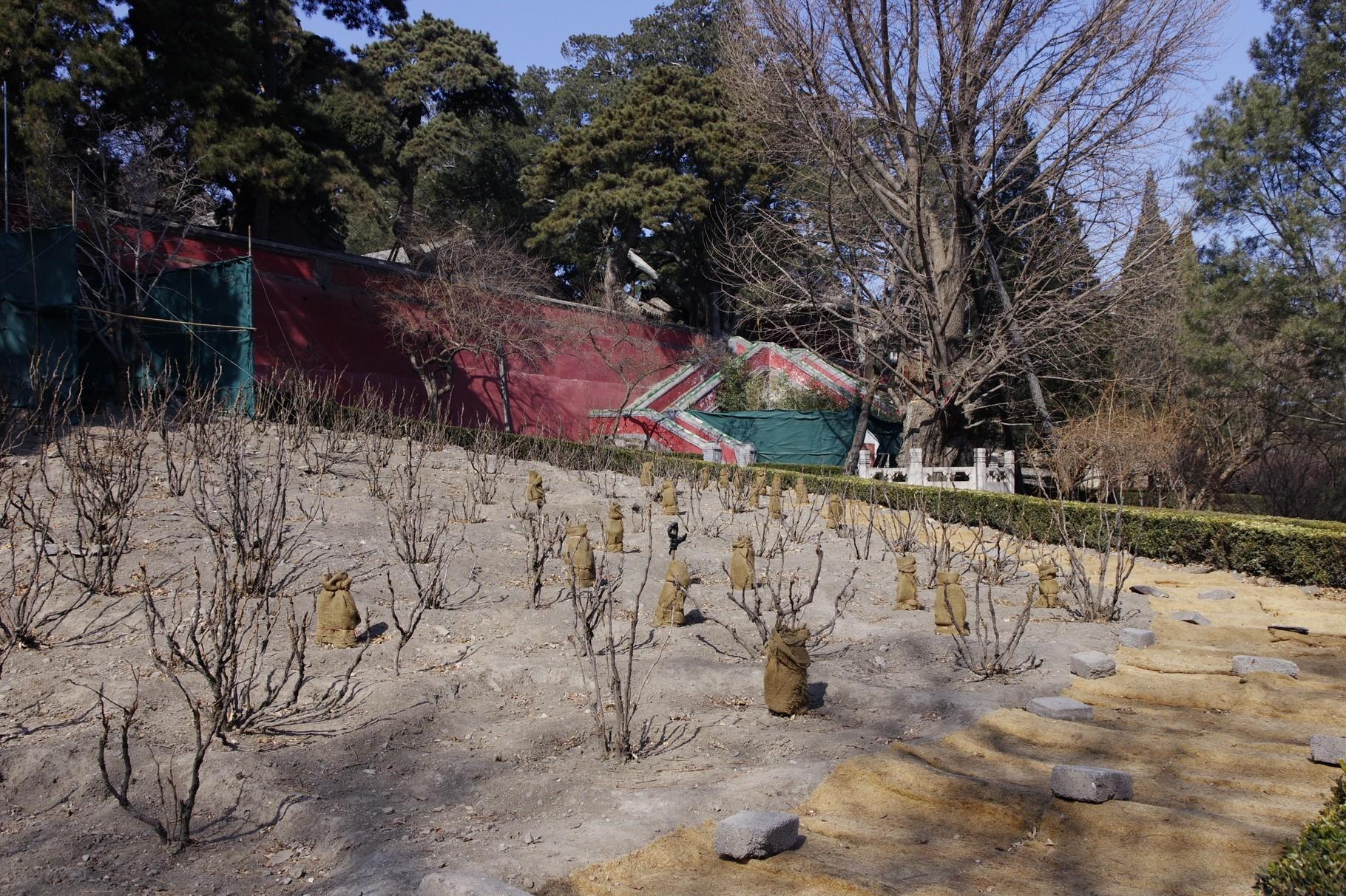 后花園(牡丹園)