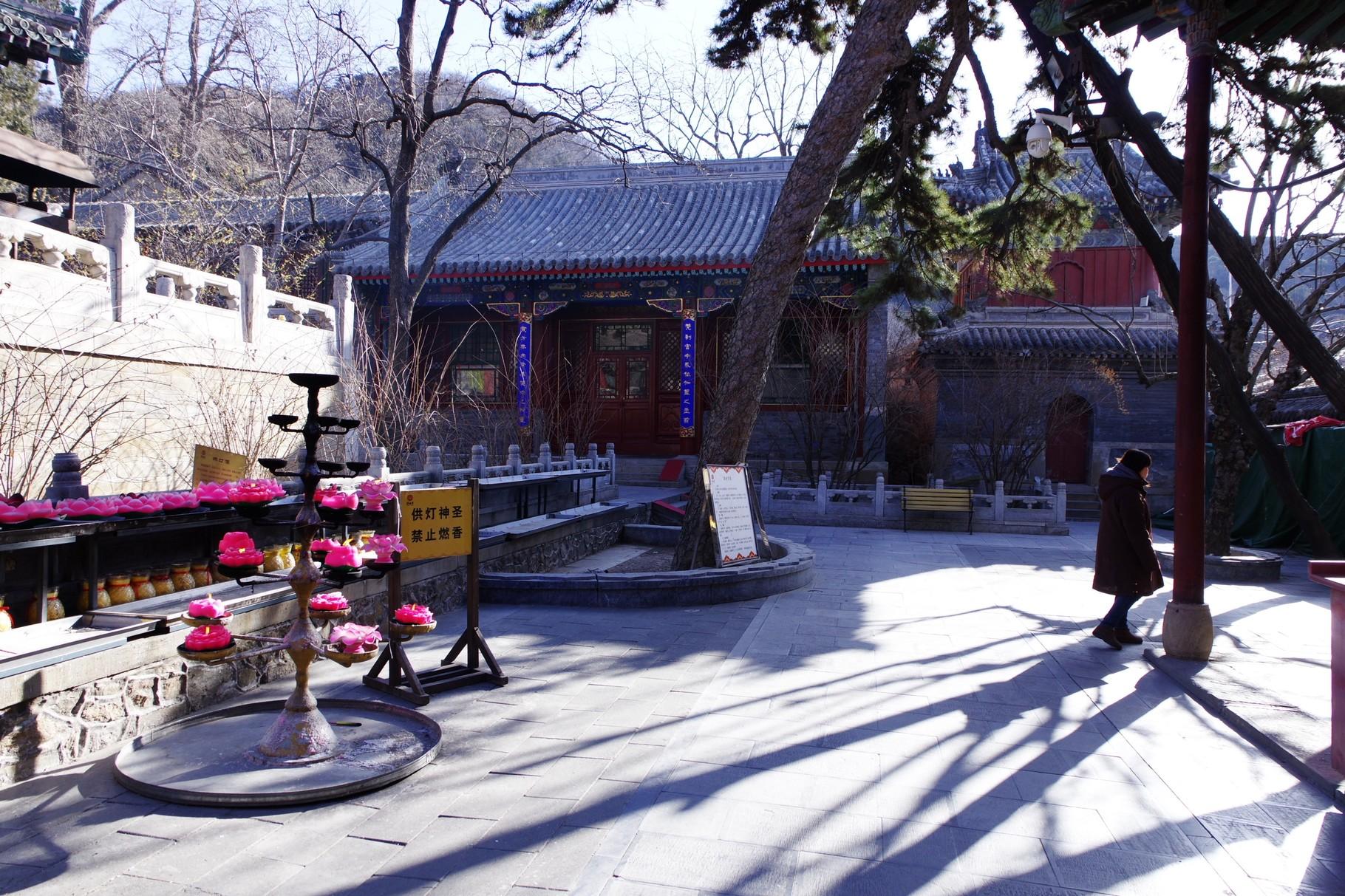 大雄宝殿前の中庭を囲む建築群と古樹
