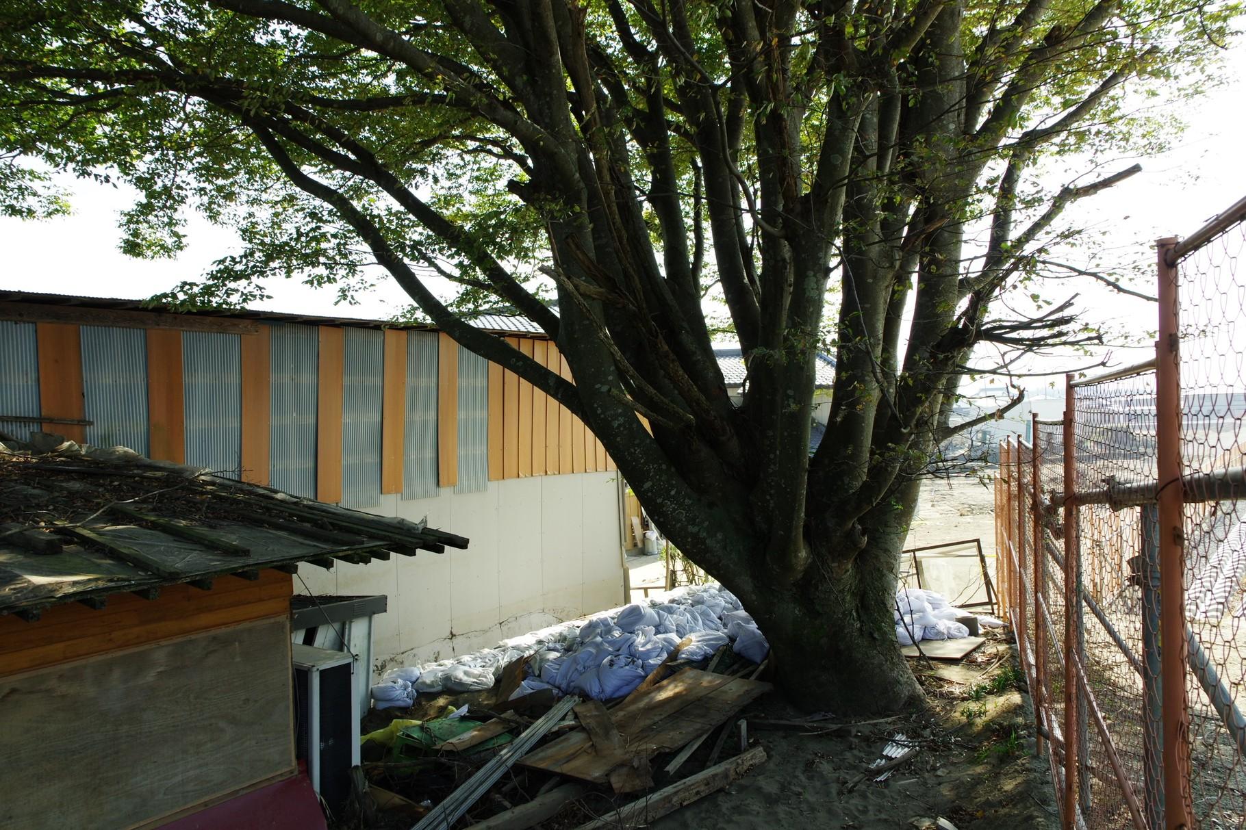 この大木の上流側50mと下流側150m、あわせて200mが決壊