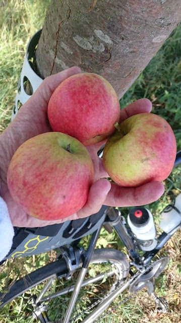 Superleckere Äpfel für die Provianttasche.