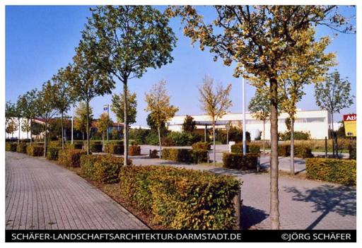 strassenplanung-baumarchitektur-strassenbegleitgrün-baumpflanzung.jpg-jörg-schäfer-stadt-ludwigsfelde
