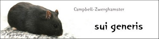 Campbell-Zwerghamster sui genesis