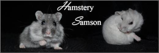 Hamstery Samson