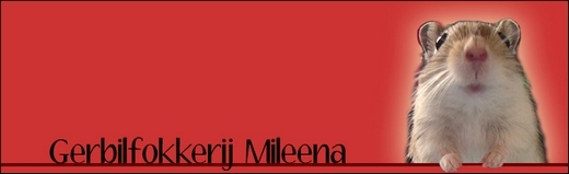 Gerbilfokkerij Mileena