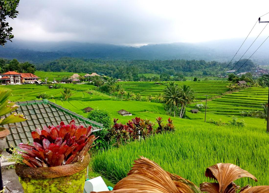 Reisterrassen & Wasserfall Tour Bali
