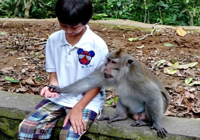Monkey Forest Ubud / urlauber-bali.de