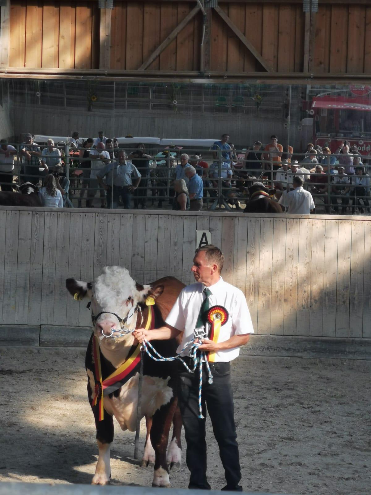 Der Bulle TYLER (Tuesday x Blair-Athol Major Kuh) wird Bundessieger