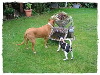 Tierschutzhunde - soooo lieb