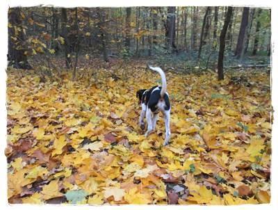 Herbstspaziergang - da sieht man Coppa meist von hinten - Fotosession mag er nicht - oder besser noch nicht - hihi.