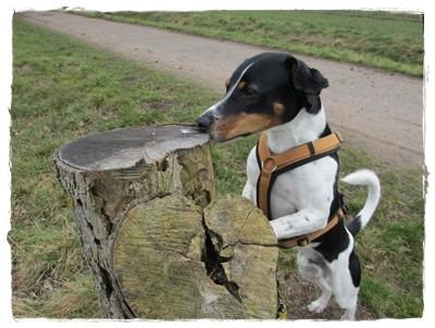... und zum Abschluss einen Leberwurstbaum finden - das ist Kromiglück!