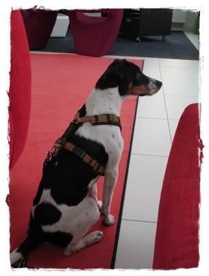 Mal wieder ein Besuch in einer Klinik, in der Hunde erlaubt sind.