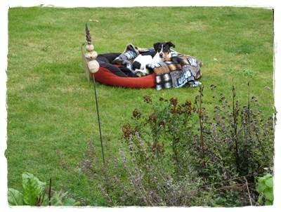 ... ein Zahntag - da bleibt sogar Coppa mal eben bei der Gartenarbeit im Körbchen.