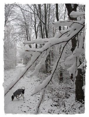 Schöne Winterlandschaft!