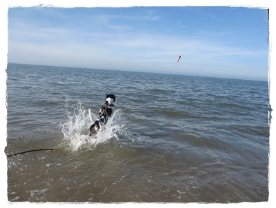 Aber einer kam durch - Coppa ab in die Nordsee!