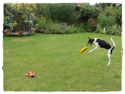 Coppas neue Leidenschaft - Frisbee - wie bei vielem ist er ein Naturtalent!