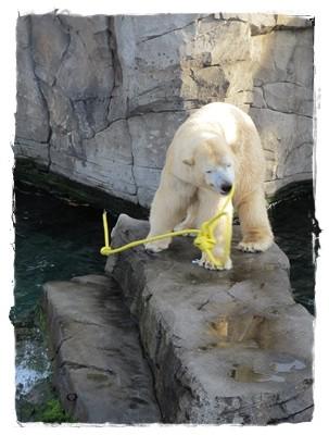 Der war ihm nicht geheuer, aber den Wasserschlauch hätte er wohl gerne gehabt zum Spielen.