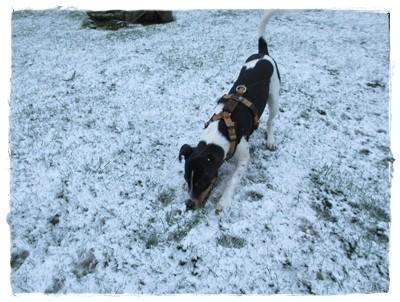 ... Coppas erste Schneeflocken hat er erst zu Hause wahrgenommen - vorher hat Debbie ihm den Kopf verdreht.