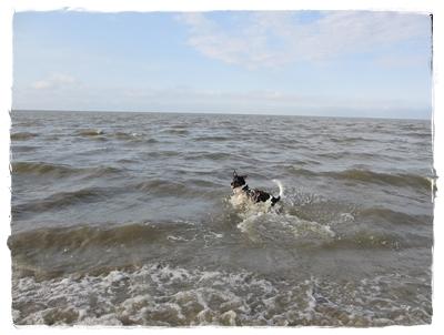 ... meine geliebte Nordsee