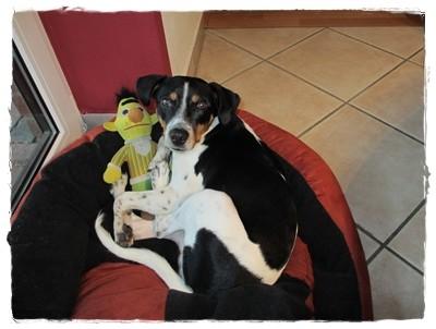 Kraft tanken für einen Kromispaziergang - Bert ist mit mir!