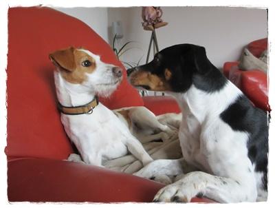 ... oder kuscheln im Haus - gib' Küsschen Schwesterchen :-)