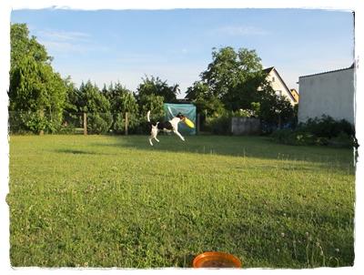 Coppas zweite Leidenschaft neben Schwimmen und Leuchtturm - Frisbee!
