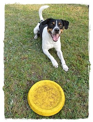 Coppa und seine geliebte Frisbee