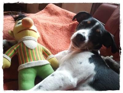 Ernie ist schon zweimal erledigt - Bert versuche ich mal :-)
