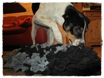 ... der Schnüffelteppich - mit dem kann sie mich überall hervorlocken!
