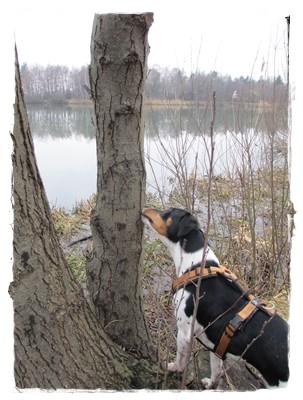 Ein letzter Leberwurstbaum - Coppa konnte es nicht glauben.