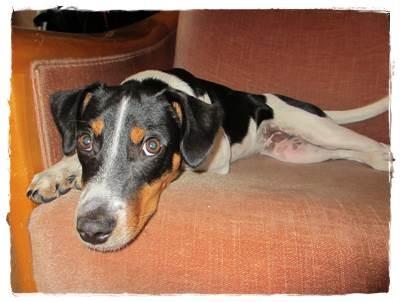 ... völlig entspannt - auf dem Sessel - auf dem er nicht sein soll :-)