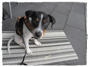 Unterwegs ist Coppa angepasst - hier in einem Fachklinikum - toll, dass hier Hunde erlaubt sind!