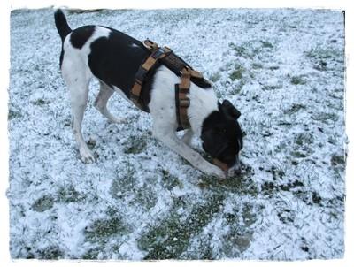 Im Schnee lässt sich noch besser buddeln.
