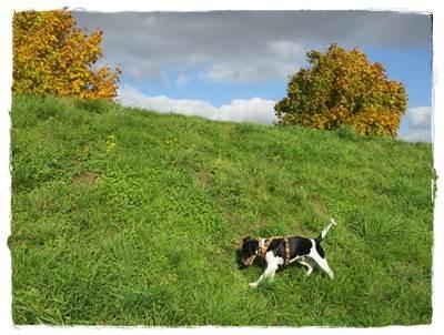 ... der Wietzepark - Hundeauslauffläche - nie treffen wir Hunde :-(