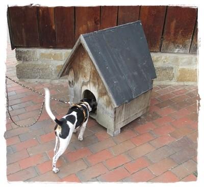 Es soll Hunde geben, die so leben - unverständlich meint Coppa.