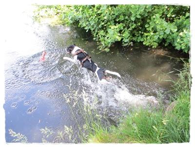 Coppa geht nun endlich freiwillig schwimmen und