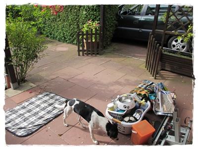 ... das ist die Reise mit leichtem Hundegepäck - prust!